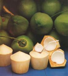 Fresh  Young  Coconut For  Sale  In Bulk.