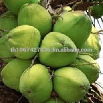 Bulk Organic Fresh Young Coconut, (Diamond Shape, Polished Shape) Available Now!!!!