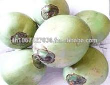 Best Quality Organic Fresh Young Coconut, (Green Coconuts)