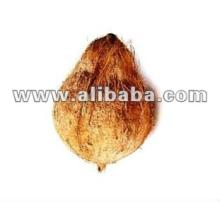 Coconut from India