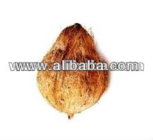 Exporting Coconut