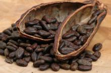 Cocoa Chocolate, Cocoa Beans
