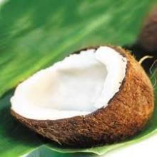 Coconut in Fresh