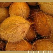 Coconut Matured