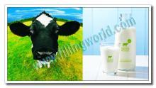 Yogurt Production Line, UHT Turn-key Yogurt Factory Project
