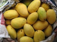 Chaunsa Mango exporters and suppliers from Pakistan