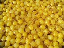 Cherries in S02