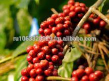 Green Caffee Bean Extract 50%, 98%, 99% Chlorogenic Acid