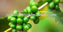 Green Caffee Bean Extract Chlorogenic Acid