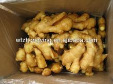 chinese top quality fresh ginger
