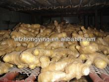 Exporting top quality dry ginger from china
