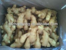 new crop fresh ginger with the size of 100g&up,150g&up,200g&up