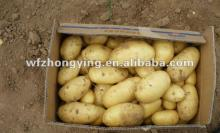 Fresh potato with best quality