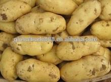 fresh  potato es  export er in china
