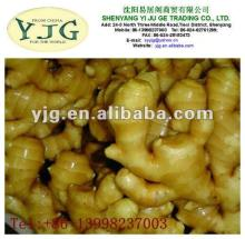 2013 NEW SEASON fresh young ginger for exporting  HOT  SALE