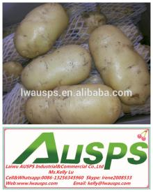 importers in malaysia product name fresh potato importers in malaysia ...