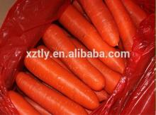 Chinese New Crop Hot Sale Fresh Carrot