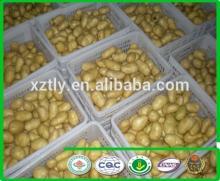 New  China  Fresh Potatoes with good price