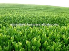 Delicious and Nutritious matcha leaves for foods , small lot available