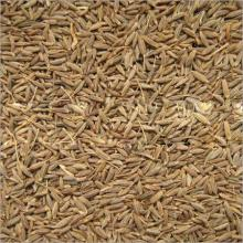 99% Singapore Quality Cumin Seeds For Natherlands