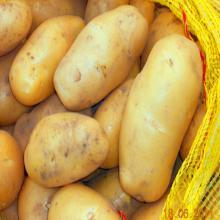 fresh  potato   export er