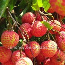 raw organic litchi honey