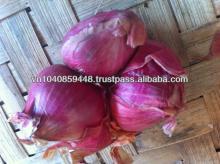 Fesh Onion