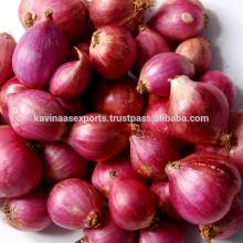 export  quality fresh  small   onion s