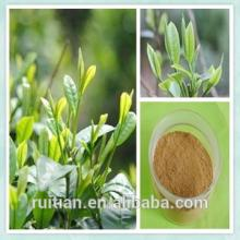 water   soluble  green tea extract powder with tea  polyphenol  egcg
