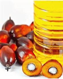 palm fruit oil is a cucumber a fruit or a vegetable