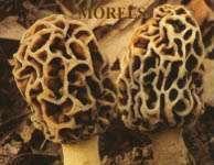 saffron,seeds ,herbs, dry fruits ,kashmiri hancrafts,forestry products, mushrooms.morels