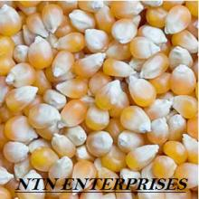 Yellow Corn #2 As Animal feed