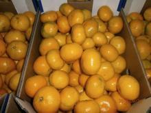 Mandarins, from Croatia (EU)