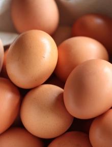 QUALITY FRESH CHICKEN EGGS FOR SALE