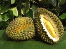 Durians, Dried Durian, Fresh Durian, Freeze Dry Durian,