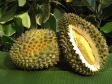 Durian s, Dried  Durian ,  Fresh   Durian , Freeze Dry  Durian ,