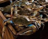 Live   Crab s