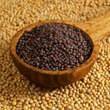 Mustard Seeds, Mustard Powder