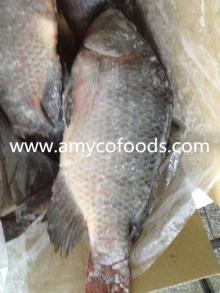 Fish Tilapia Whole Frozen 100% fresh