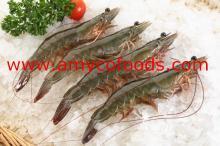 Shrimp Raw