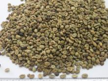 VIETNAM ROBUSTA COFFEE S13/S16/S18 FOR SALE
