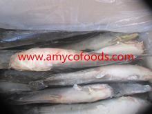 Catfish whole round IQF
