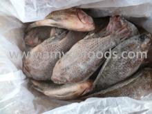 Tilapia Gutted and Scaled Grade A