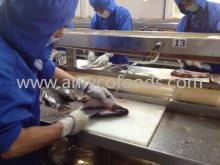 Filleting Tilapia