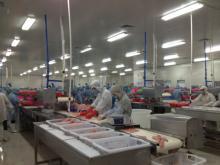 Tilapia Fillet processing