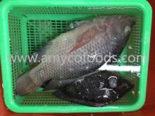 Fish Tilapia Frozen