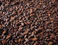 cocoa baens