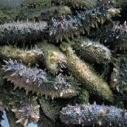 Dry Sea Cucumber for sale