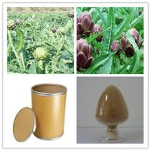 HHerb brown powder 5%  cynarin   artichoke   extract