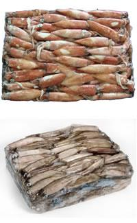 Squid W/R (Loligo patagonica)